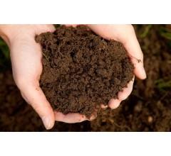 Image for Is Irish Dirt the New Super Antibiotic?