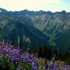 Study: 20 Minutes In Nature Reduces Stress