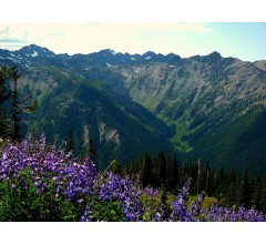 Image for Study: 20 Minutes In Nature Reduces Stress
