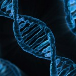 Study: Body Fat Storage Determined By Genes
