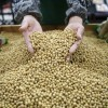 Chinese Government: More Soybeans Must be Grown