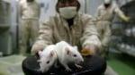 Doctors Diagnose Second-Ever Case of Rat Hepatitis in Humans