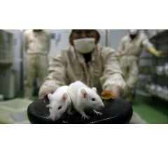 Image for Doctors Diagnose Second-Ever Case of Rat Hepatitis in Humans