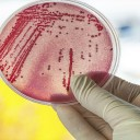 CDC Issues New Report On Drug-resistant Superbugs