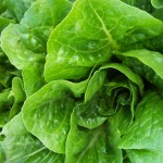 Death Attributed To Romaine Lettuce E. Coli Outbreak