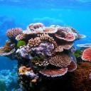 New Disease Devastating Caribbean Coral Reefs