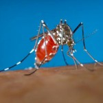 Mosquitoes Develop Ability To Resist Toxins With Legs