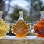 Is Maple Syrup A Superbug Miracle Drug?
