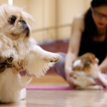 China's Booming Market for Pets Creating Deals