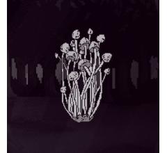 Image for Spore (SPORE) Reaches 1-Day Volume of $77,766.00