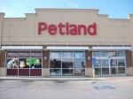 Petland Puppies Linked To Illness Outbreak