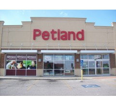 Image for Petland Puppies Linked To Illness Outbreak