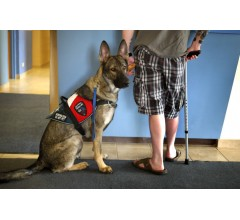 Image for Delta Releases New Rules For Service And Support Animals
