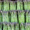 Amino Acid In Asparagus Linked To Breast Cancer