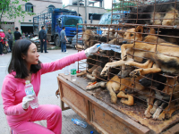 10,000 Dogs to be Slaughtered and Eaten for Chinese Festival