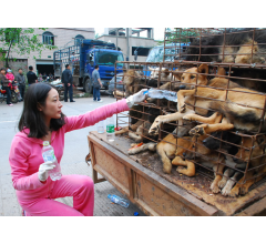 Image for 10,000 Dogs to be Slaughtered and Eaten for Chinese Festival