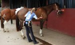 Grooming Horses Can Prevent Health Issues