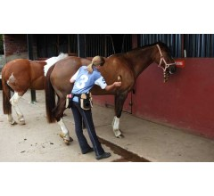 Image for Grooming Horses Can Prevent Health Issues