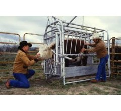 Image for FDA: New Policies for Antibiotics Use on Farms