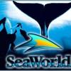 SeaWorld's Earnings Beat Expectations (NYSE:SEAS)