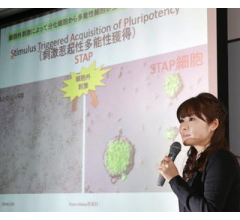 Image for Stem Cell Researchers from Japan Withdraw Research