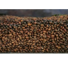 Image for Cocoa Flavanols Linked to Improved Senior Memory